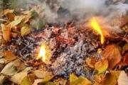 Палити листя – заборонено